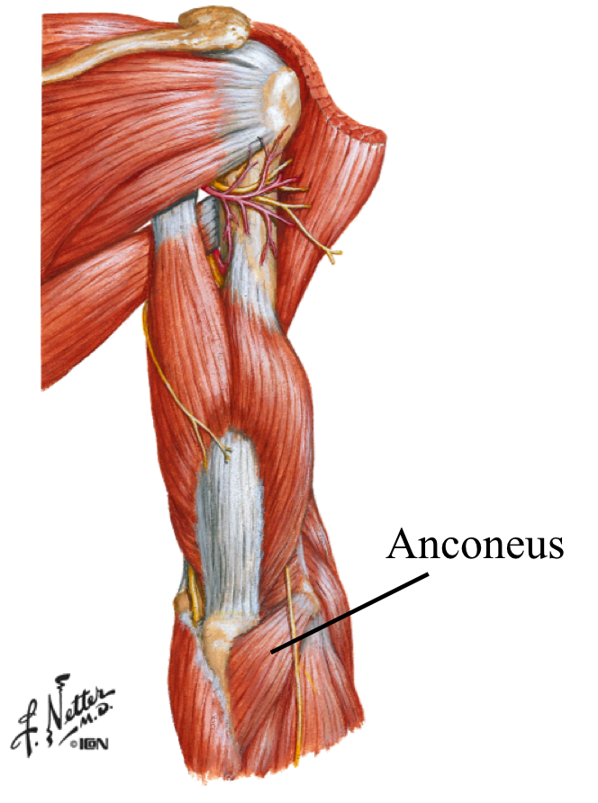WODdoc Episode 53 Project365: Anconeus Release to Resolve Elbow Pain ...