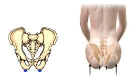 butt bone