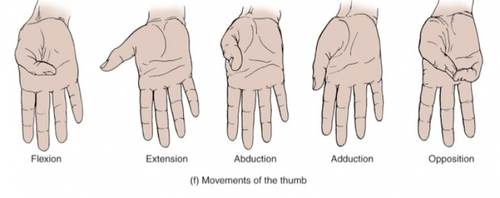 thumb action